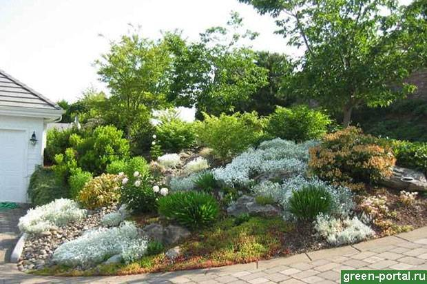 Растения для альпийской горки - тонкости выбора, схемы высадки растений, рекомендации по уходу