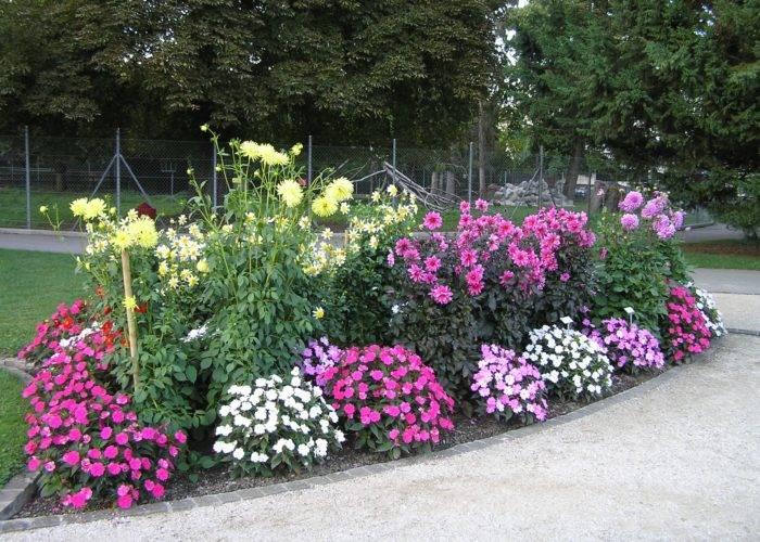 Как вырастить бальзамин из семян: пошаговая инструкция - sadovnikam.ru