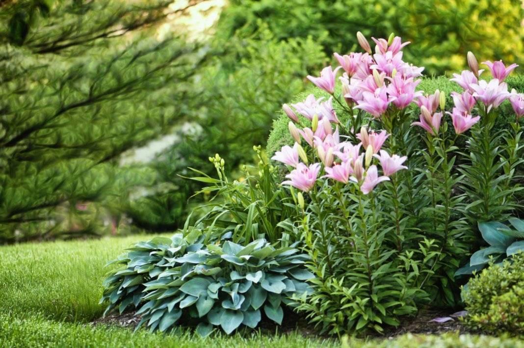 Клумбы с ирисами в ландшафтном дизайне: оформляем цветник, садим семена, поливаем и пропалываем