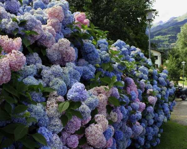 Декоративные кустарники для сада: названия с фото