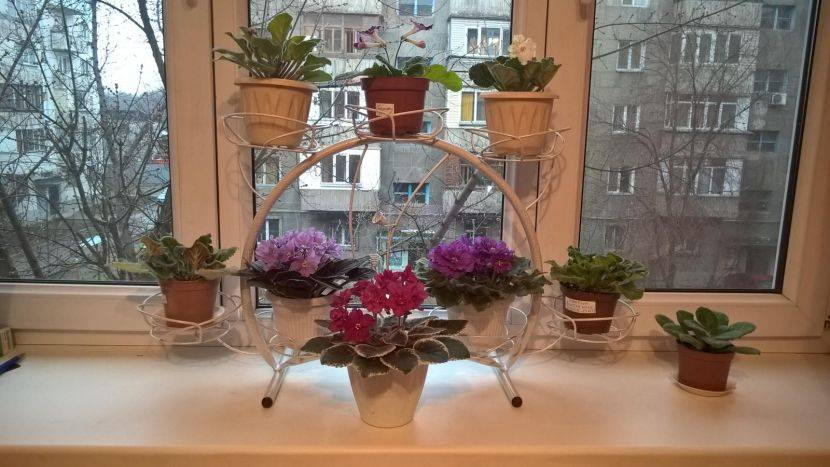 Какие выбрать полки для цветов