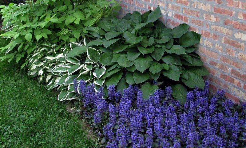 Неприхотливые тенелюбивые растения для сада многолетние и однолетние: фото и названия с описанием