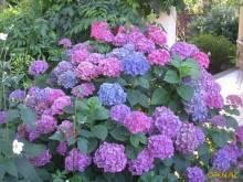 Тенелюбивые и теневыносливые растения для сада: многолетние цветы и кустарники