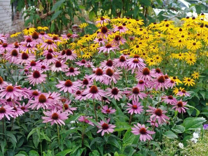 Что можно посадить в тени: цветы, которые мирятся с нехваткой света