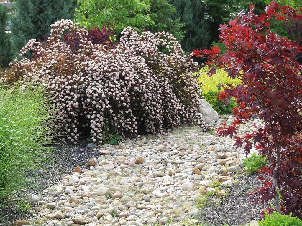 Виды и выращивание цветущих декоративных кустарников