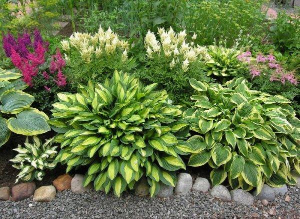 Фото и названия тенелюбивых растений