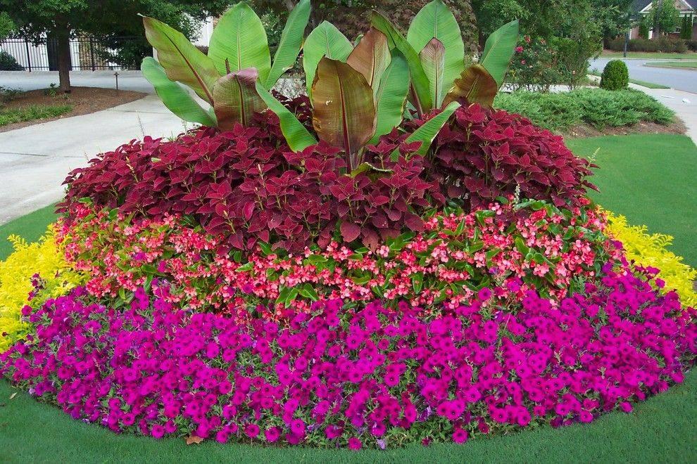 Садовые виды бальзаминов: выращивание уличных кустарников на клумбе в саду
