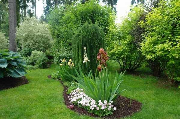 Ирисы в ландшафтном дизайне сада: с какими цветами сочетается, фото, примеры клумб