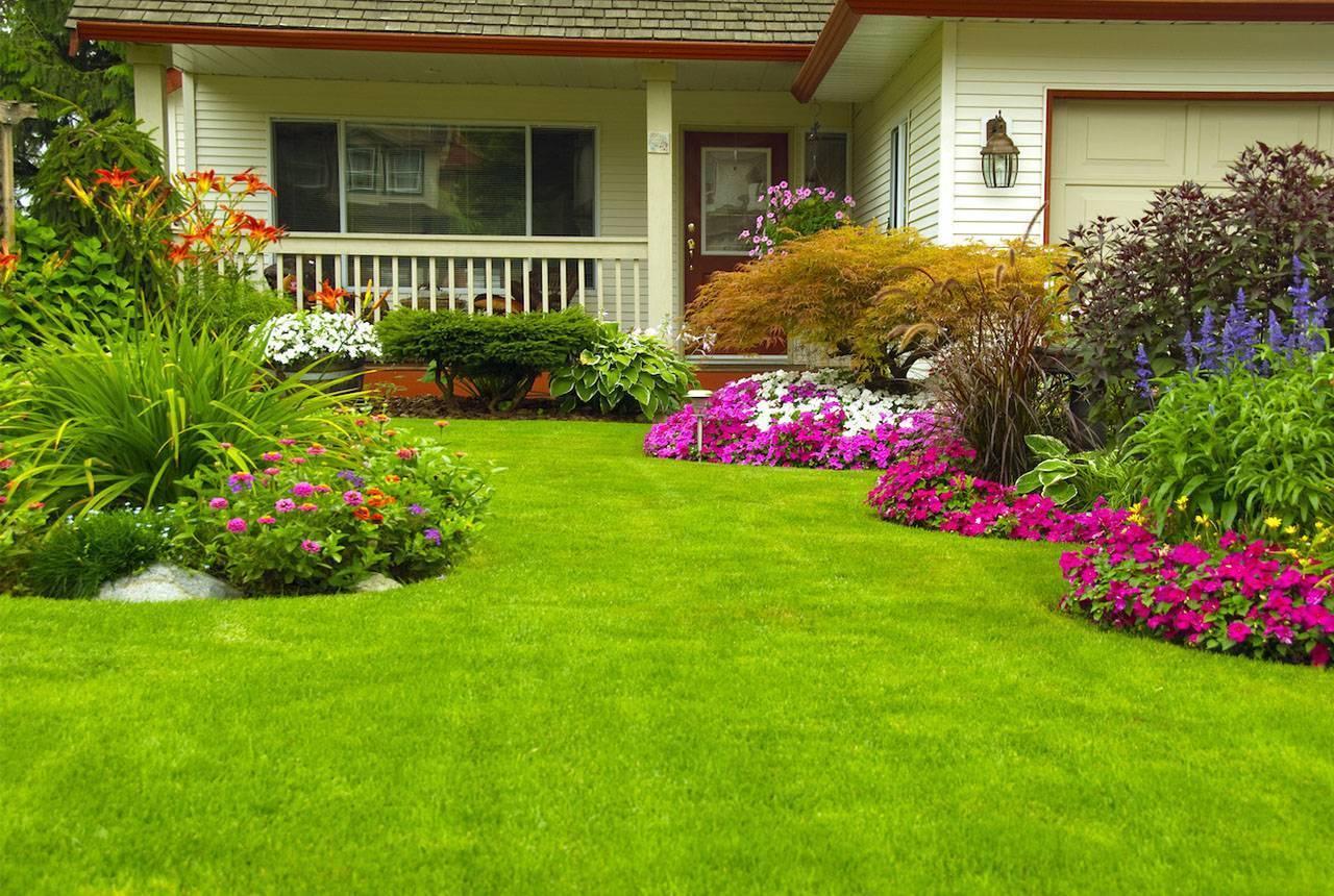 Лучшие цветы для дачи - правила и особенности сочетания и посадки цветов (125 фото)