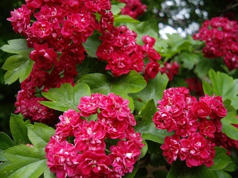 Теневыносливые цветы для сада: многолетние красавцы