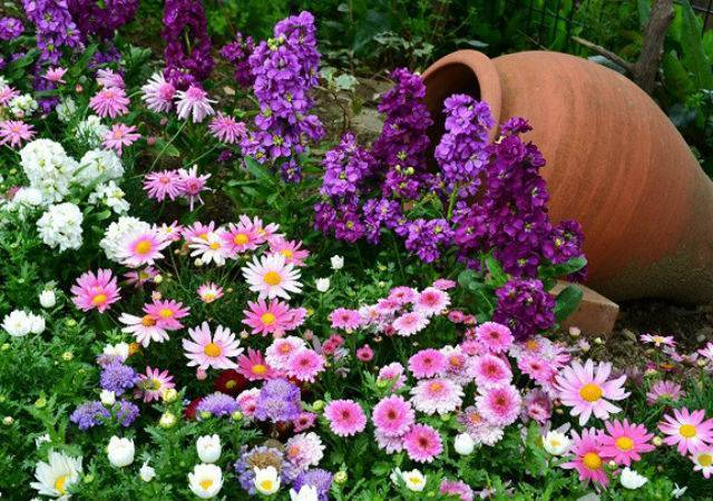 Деревья, кустарники и цветы в ландшафтном дизайне (77 фото): композиции с рябинником рябинолистным и тамариксом, можжевельником и девичьим виноградом
