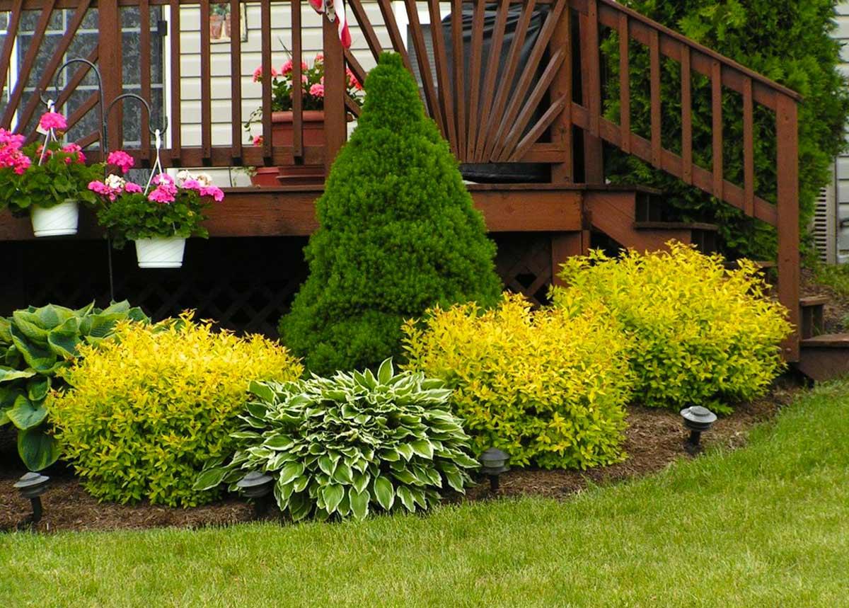 Оформление клумбы возле дома своими руками: правила обустройства, выбор растений, фото