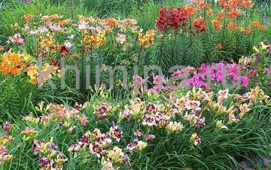 Ирисы в саду — классификация и использование в дизайне