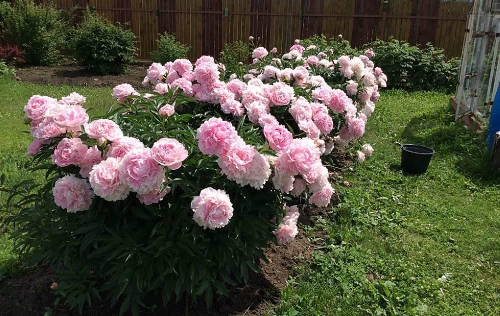 Цветы в ландшафтном дизайне (86 фото): гортензии, ирисы и розы в саду, флоксы и обриета для дачного участка