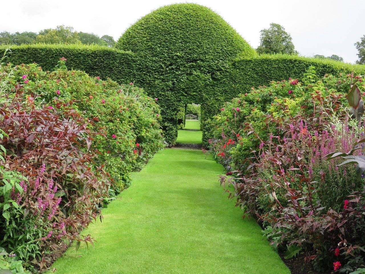Красивые декоративные кустарники для сада