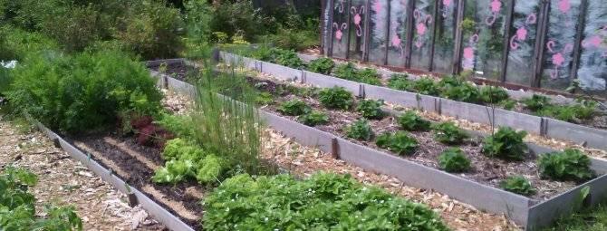 Как огородить грядки на даче